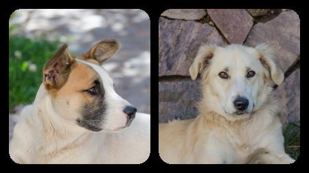 Cachorro-Manzana